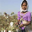 India faces a reversal in cotton business