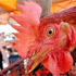 U.N. warns on mutant strain of bird flu virus